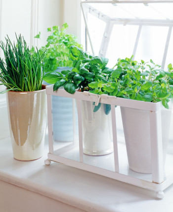 Learn How to Turn Any Kitchen into a Mini Greenhouse with ...